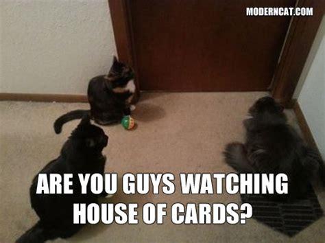 Moderncat Com Giveaways - modern cat memes modern cat