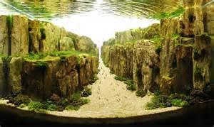 aquascape freshwater aquarium les plus belles plantes d aquarium 2tout2rien