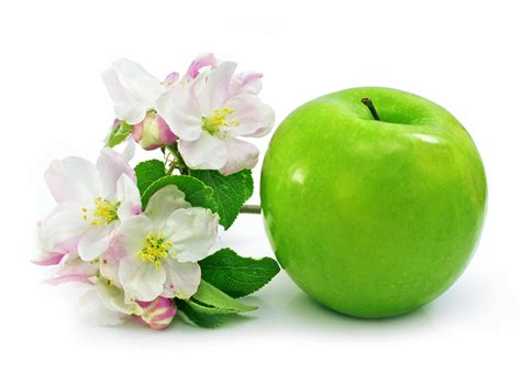 apple wallpaper white flower green apple tree flower www pixshark com images