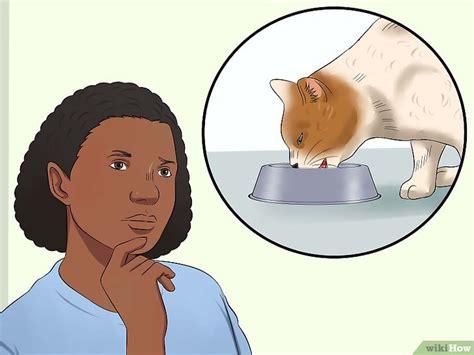 come fare un clistere in casa come fare un clistere al gatto in casa 11 passaggi