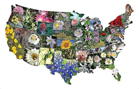 states flowers state flowers google search wildflowers pinterest