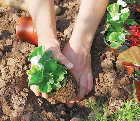 garden  month  gardening ideas thompson