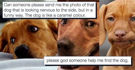 mans search   dog meme  brought