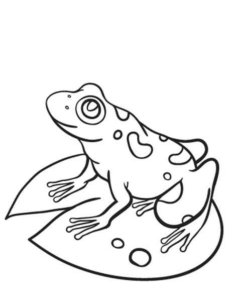 frog coloring page pdf printable frog coloring page free pdf download at http