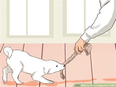 how to puppy not to bite how to a puppy not to bite 9 steps with pictures