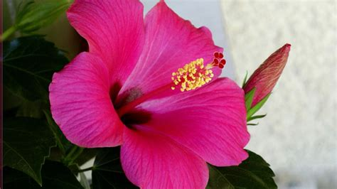 chambre d hote gosier guadeloupe chambre d hote guadeloupe hibiscus
