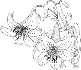 lily blossom coloring page free printable coloring pages