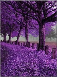 download purple autumn wallpaper mobile wallpapers
