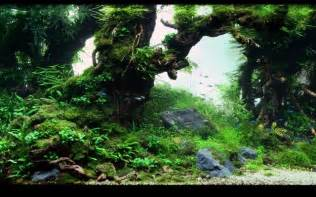 freshwater aquascape freshwater aquascape freshwater aquarium obsession