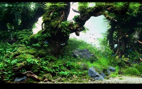 Aquascape Freshwater Freshwater Aquascape Freshwater Aquarium Obsession