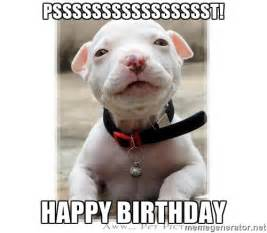 Pitbull Meme - psssssssssssssssst happy birthday baby pitbull meme