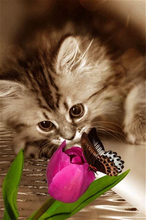 wallpaper gif cute cute live wallpaper animated cat gif 1