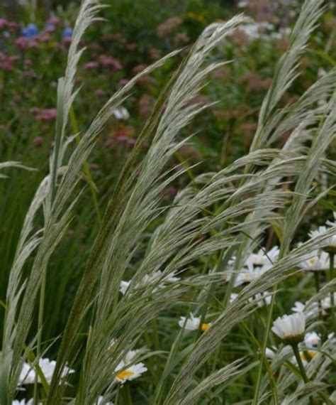 ornamental grass flowering 12 plant collection plants