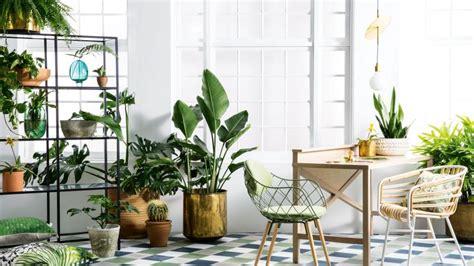 tanaman hias   cocok   rumah