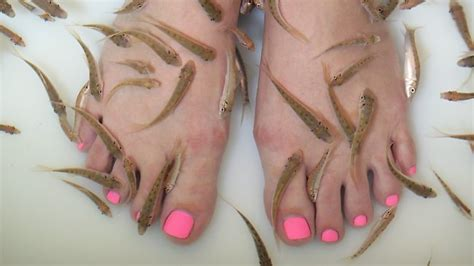 hungry fish ready to take on feet as latest spa craze hits