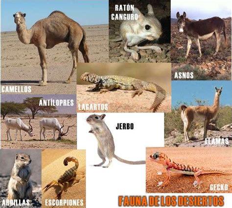imagenes de animales del desierto flora y fauna de los desiertos concepto y la vida