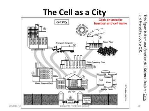 Cell City Worksheet by Presenting With Analogy And Metaphor