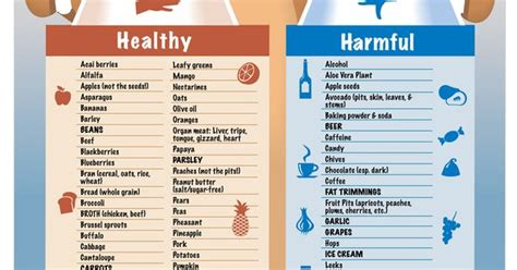 human medicine for dogs quot healthy vs harmful food for your dogs quot infographic by cityleash a note about