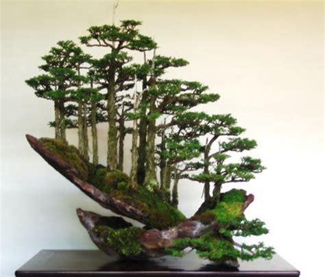 Pot Sedang tips memilih pot tanaman bonsai bibitbunga