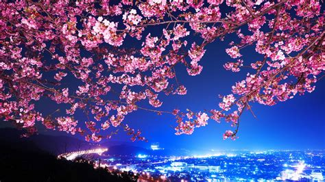 cherry blossom lights wallpaper cherry blossom city lights desktop wallpaper 187 nature 187 goodwp