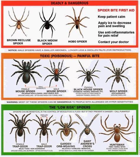 Can A Garden Spider Kill You Southern California Garden Guide Basic Gardening Garden