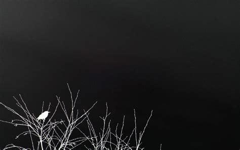 imagenes oscuras fondos naturaleza blanco y negro art pinterest fondo en