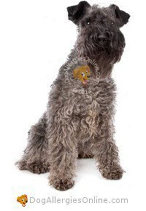 allergy friendly dogs allergy friendly sporting and working dogs