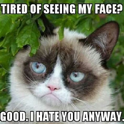 Grumpy Cat Good Morning Meme - 111 best images about ode to tarder sauce aka grumpy cat
