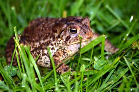 How To Get Rid Of Toads In Backyard by How To Get Rid Of Frogs The City Your Questions