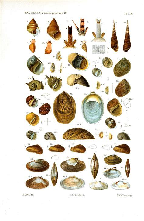 animal sea shell educational plate vintage printable