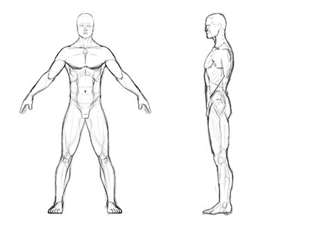 male body template male body outline front and back i then