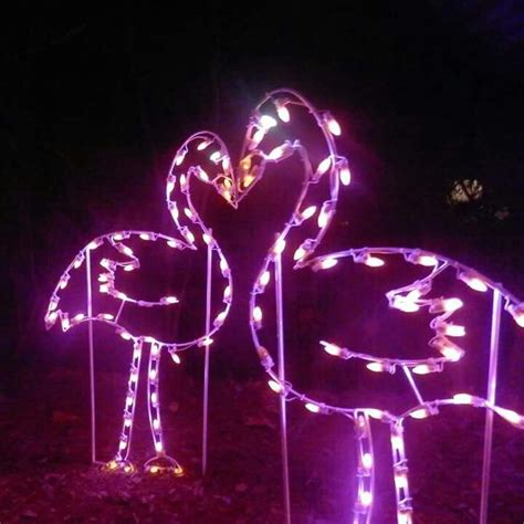 17 Best Images About Jacksonville On Pinterest Well Jacksonville Zoo Lights