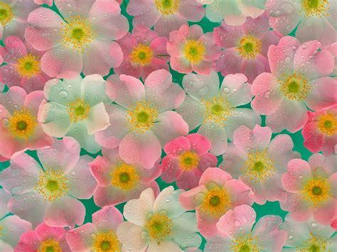 for flowers fresh flowers