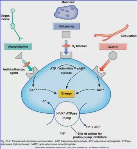 proton inhibitor mechanism of 14 best diabetes images on diabetes
