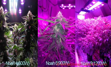 led lights and plant growth how to use led grow light for your marijuana best led