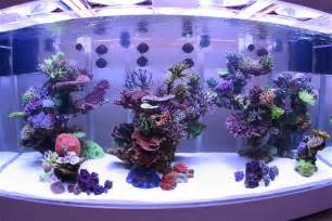 reef on reef aquarium aquarium and