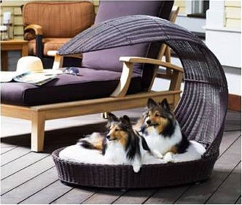 pet furniture a must for pet s owners find