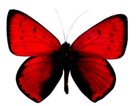 imagenes reales red wings homenaje a nuestras hero 237 nas este 8 de marzo mariposa