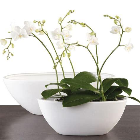 vaso orchidee vasi per orchidee orchidee vasi per orchidee