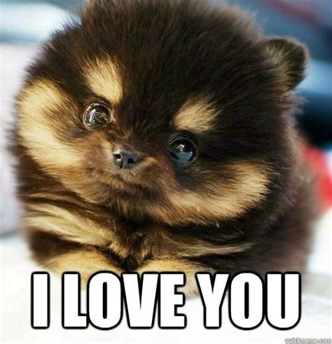 Funny I Love You Meme - i love you meme puppy cool cute stuff pinterest