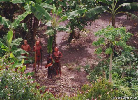 amazon tribe uncontacted indians of brazil survival international