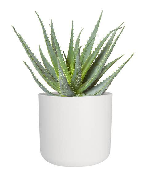 brady white  plant pot indoor plant shop indoor