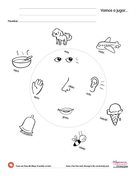 Five Senses Worksheets For Preschool by Common Worksheets 187 5 Senses Worksheets For Kindergarten