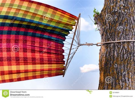Attache Hamac Arbre by Attach 233 224 Un Hamac D Arbre Balance Dans Le Vent Image