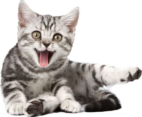 12 best Png chat images on Pinterest   Kitty cats, Baby