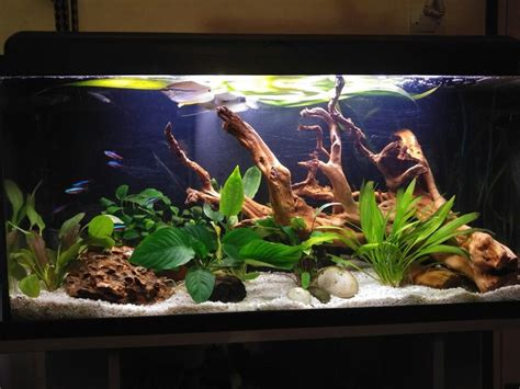 aquarium design group llc aquarium 100