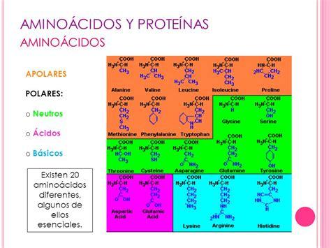 proteinas y aminoacidos ud 4 amino 193 cidos y prote 205 nas ppt descargar