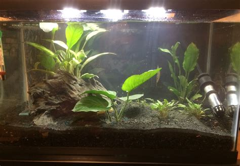 aquascape plants aquascape with plants and sand pics4learning