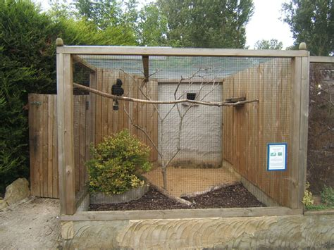 how to build an indoor bird aviary dogs