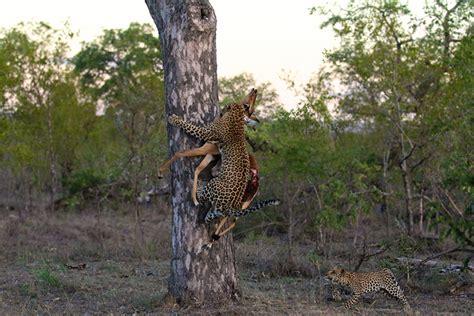animal instinct 9 animal instincts in the wilderness of londolozi